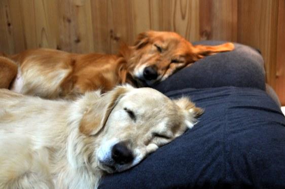Enjoy a good sleep 3