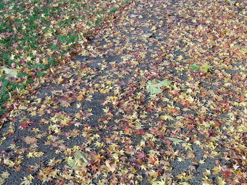 Maple leaf carpet