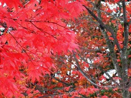 紅葉~上杉神社
