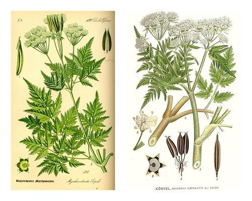 Diverse planter