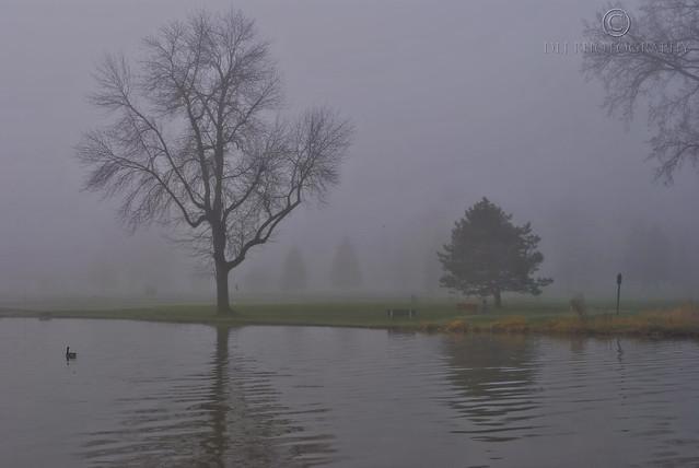 Newman Golf Course fog