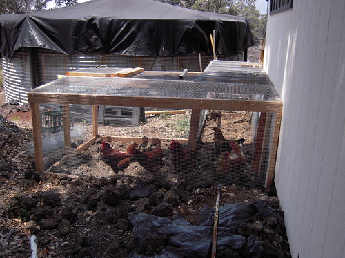 NEW CHICKEN RUN