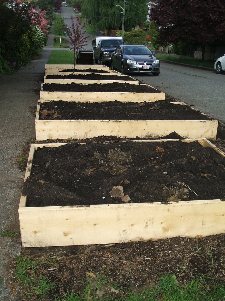 Parking strip raised beds with fresh soil