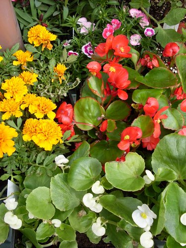 Flowers for our flower beds