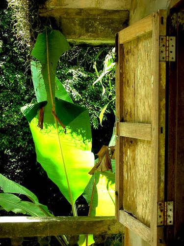 Bananenblatt vor dem Fenster