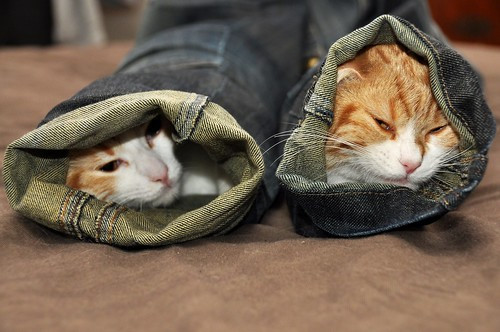 Skinny jeans look good on cats....