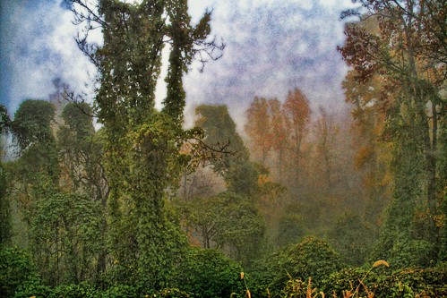 The Misty Wood of Fall