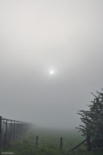Misty morning P1040146