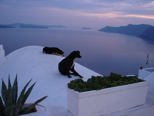 lazy dogs on the roof in greece