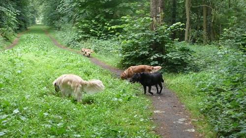 Tha gang in tha forest... (24/52)