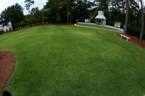 Amazing Lawn