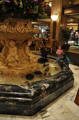 Peabody Ducks and Kids