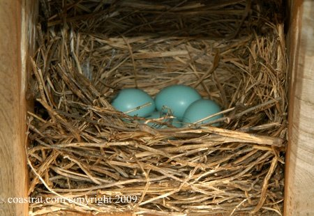 DSC_0003ABCD-Nest#2