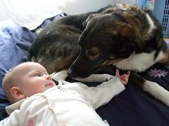 Hello puppydog