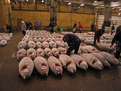 Tunas at the Tsukiji Fish Market