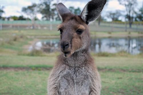 Australia_72