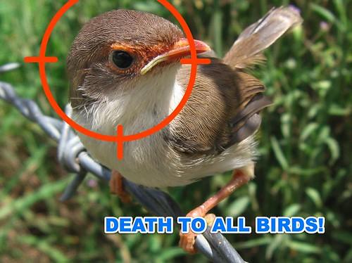 war on birds