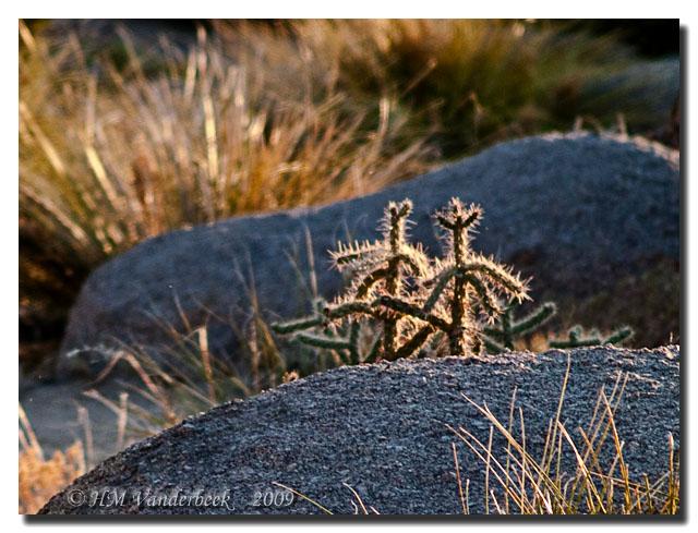 Little Alien Cacti