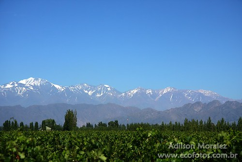 Mendoz vineyards & the Andes by Ecofotos - Adilson Moralez @ Flickr