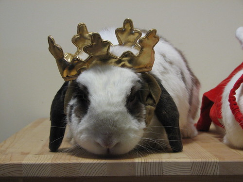 betsy looks good in a crown