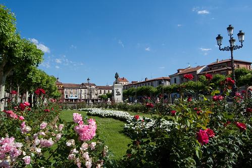 La plaza de Cervantes a través de los rosales