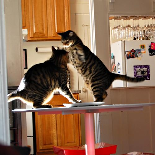 cat fight_01