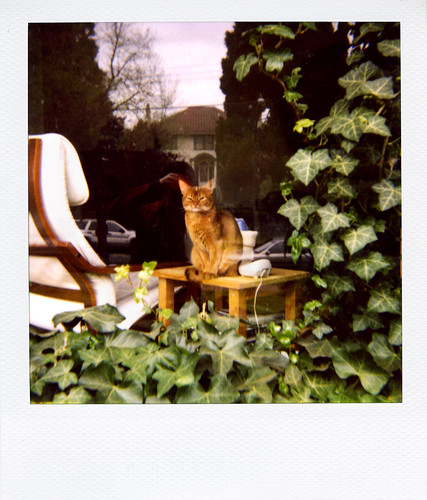 'roid week 2009: Maggie keeps an eye on the neighbourhood