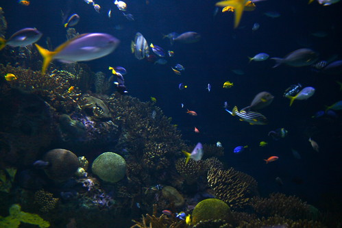 Fish Menagerie
