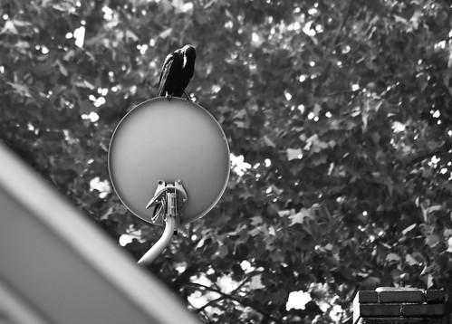 crow TV