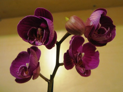 Our orchid likes the intense heat pumped out by the always-on radiators