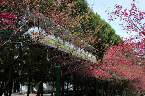 SakuraFest (9 of 73)