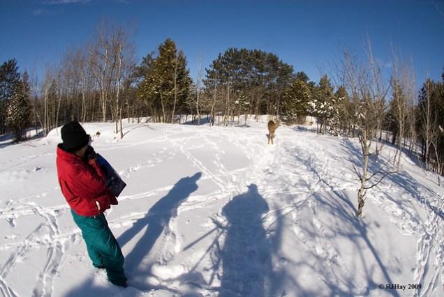 Shadow Creeping up on Deer