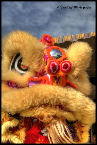 chinese tradition hdr liondance golddragon goldstaraward flickaward turtlingphotography