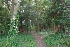久田緑地―南地区入口から(Kuden Ryokuchi, Kanagawa, Japan)