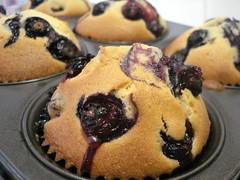 Blueberry Temptation