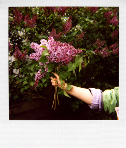 The Gift of Lilacs