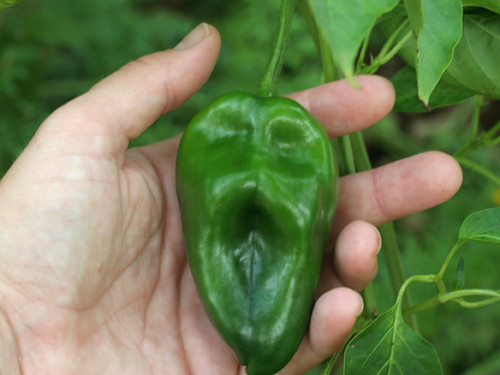 Scream-Pepper