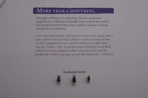 New Charles Darwin exhibit--my favorite part