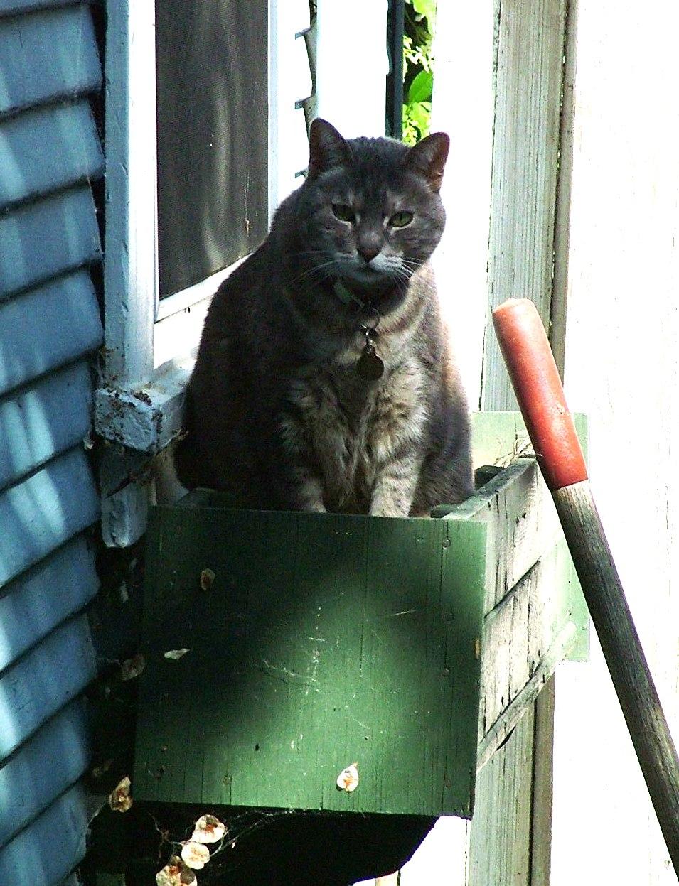 4.30.09, Sweetpea in the side yard window box