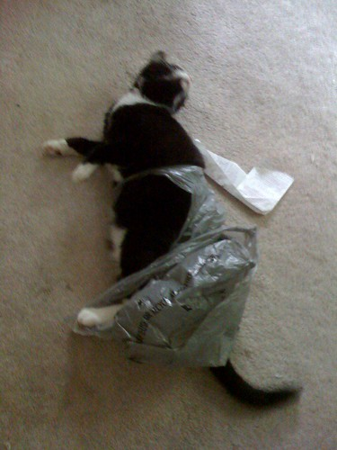 tangled kitty