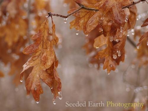 rain drops to ice drips