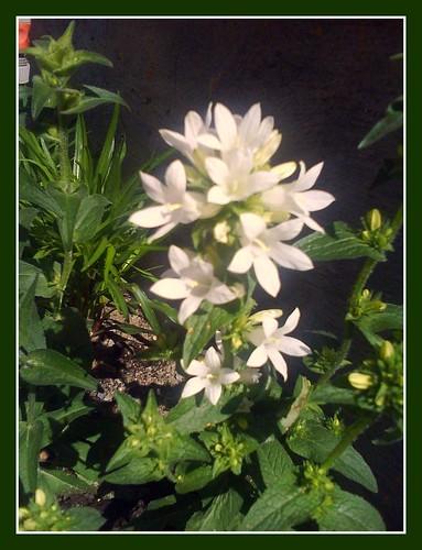 Garden blooming
