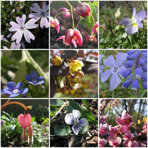 small blossom collage