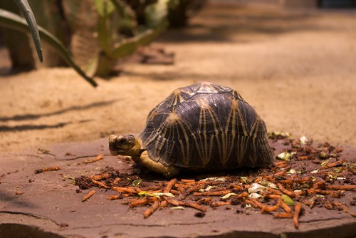 Turtle ohne Grafik