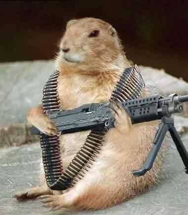 groundhog_attackk