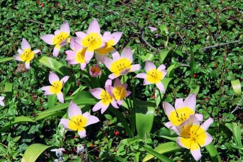 Crystal Springs Rhododendron Garden 035
