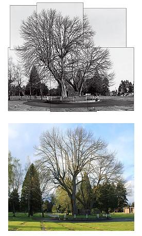 Tumwater Chestnuts - Compare