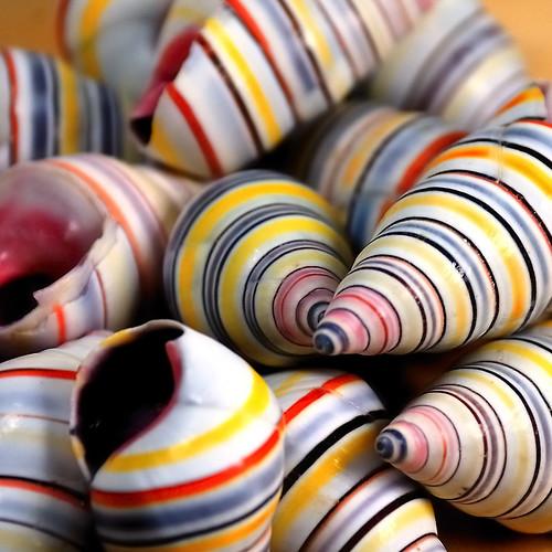 090407 Shells