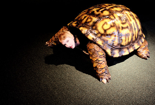 Kirsten Turtle (Photo by Jason Akira Somma)