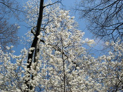 White Flowers and the Sky